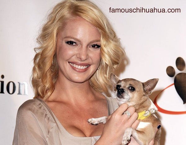 famous chihuahua loves katherine heigle