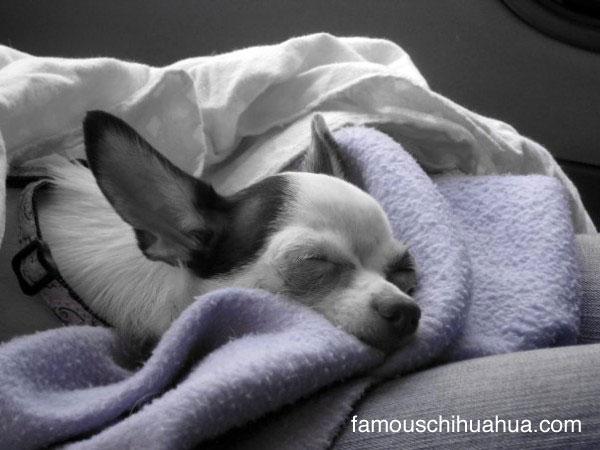 sweet dreams baby lacie