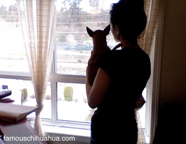 teaka the famous chihuahua bonds with mummy