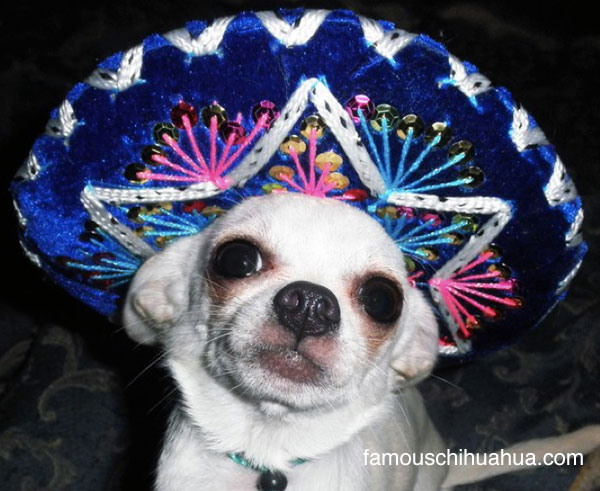 happy cinco de mayo! let's get this pawty started!