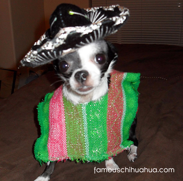 get out the margaritas!