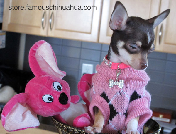did i mention my dog sweater is on sale?