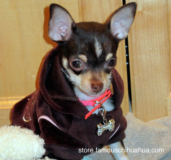 there isn't a dog hoodie out there that wouldn't look good on me!