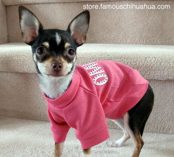 oh my god, i'm so cute in my omigod doggie shirt!