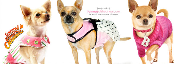 shop for affordable chihuahua clothes and accessories!