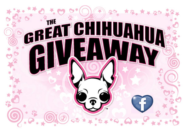 enter to win the great chihuahua giveaway picture contest!