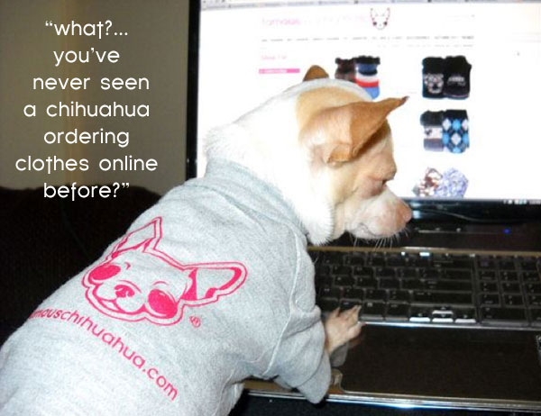make your chihuahua famous! order your famous chihuahua dog shirt today!