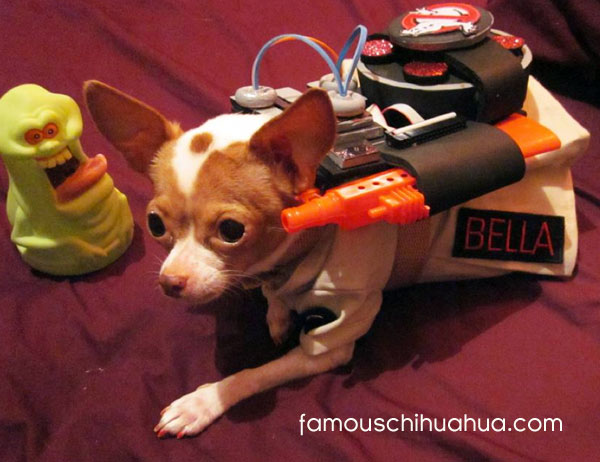 ghostbuster chihuahua!