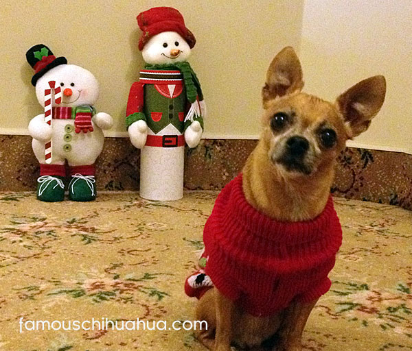 what's going on with the christmas picture contest mommy?