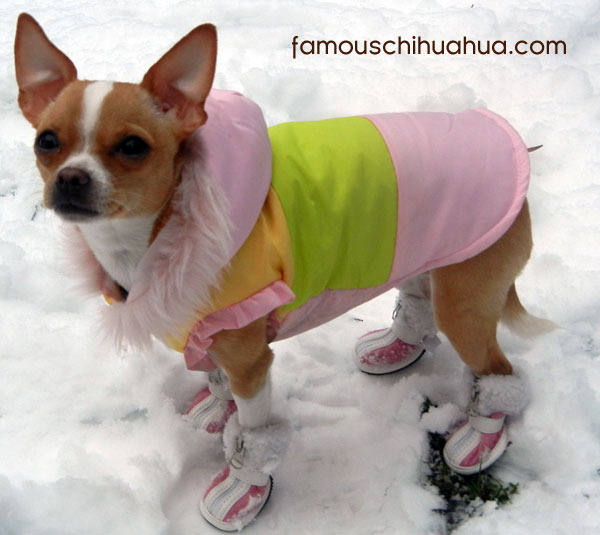 shop the famous chihuahua store for dog clothes on sale!
