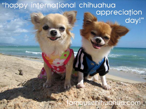 aloha! happy international chihuahua appreciation day from mimi and zeke!