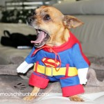 bachi as superman!