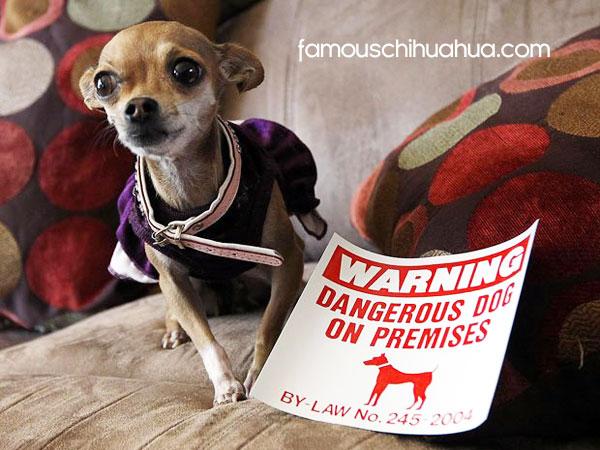 warning, dangerous dog!
