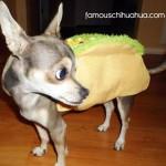 emery the taco!