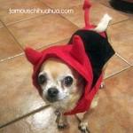 lola the devil!