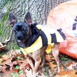 maya the bumble bee!