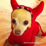 nala the little devil!