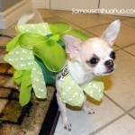 raxl as peter pan's tinkerbell!