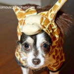 roxie the giraffe!