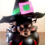 saphire the little witch!