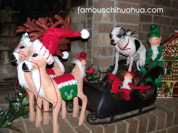 chihuahua santa guides his sleigh