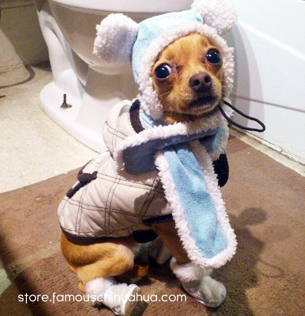 affordable winter dog coats on sale