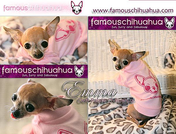 famous chihuahua dog shirt