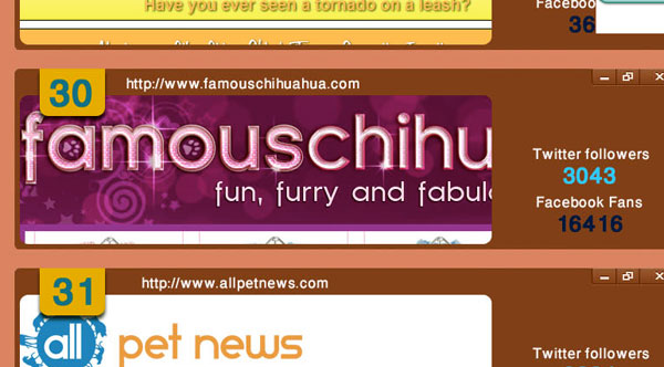 famous chihuahua top pet blog of 2013