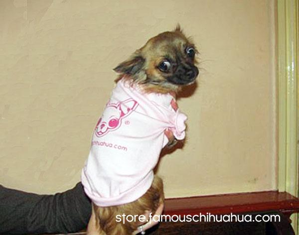 famous chihuahua dog shirts