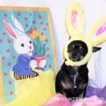 chihuahua easter bunny