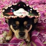sombrero black chihuahua