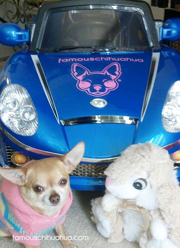 chihuahua race car