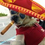 chihuahua smoking