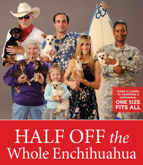 adopt a chihuahua for half price