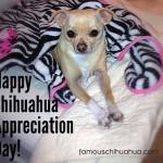 happy chihuahua appreciation day!