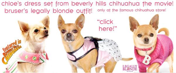 chloes beverly hills chihuahua dog dress