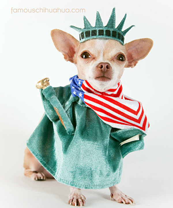 statue of liberty chihuahua