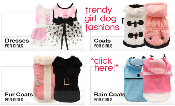 girl dog fashions
