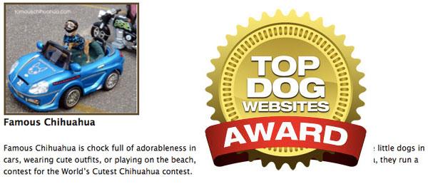 top dog website award
