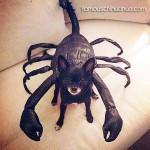 chihuahua scorpion