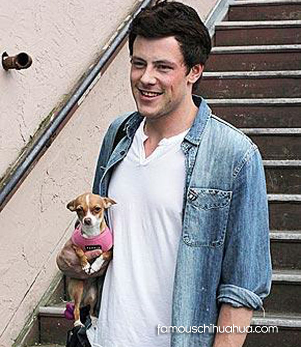 cory monteith and his chihuahua