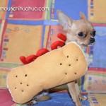chihuahua hotdog