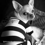 chihuahua prisoner