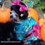 chihuahua geisha