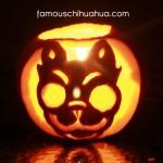 famous chihuahua pumpkin!