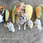 chihuahua burritos