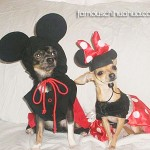 mickey and minnie mouse chihuahuas