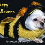 chihuahua bumble bee