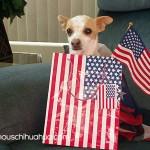 patriotic chihuahua!