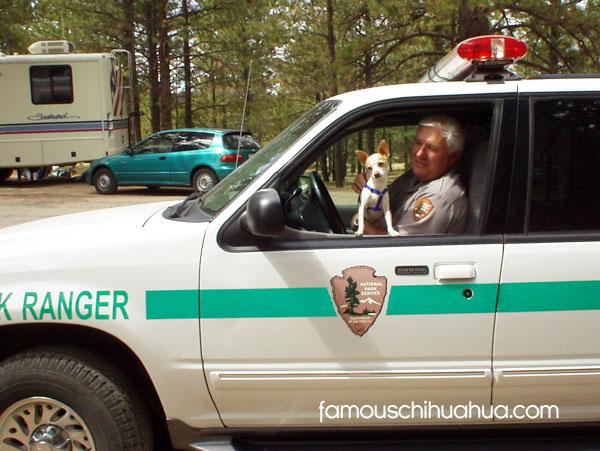 chihuahua and park ranger